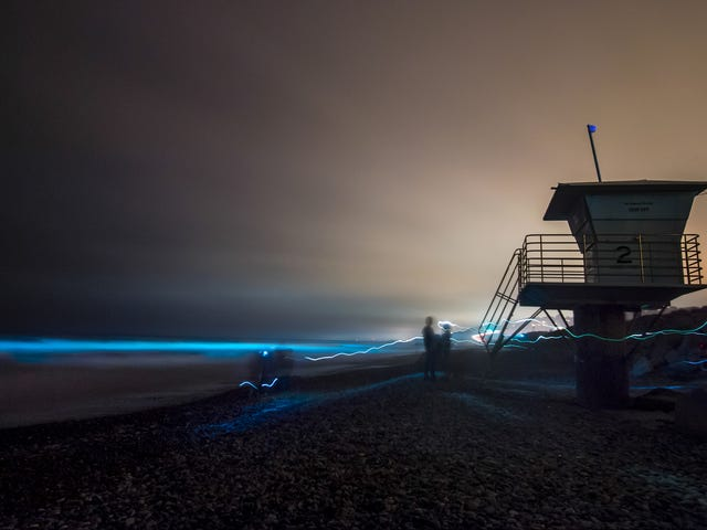 San Diego's Beaches Are Glowing With Bioluminescent Algae