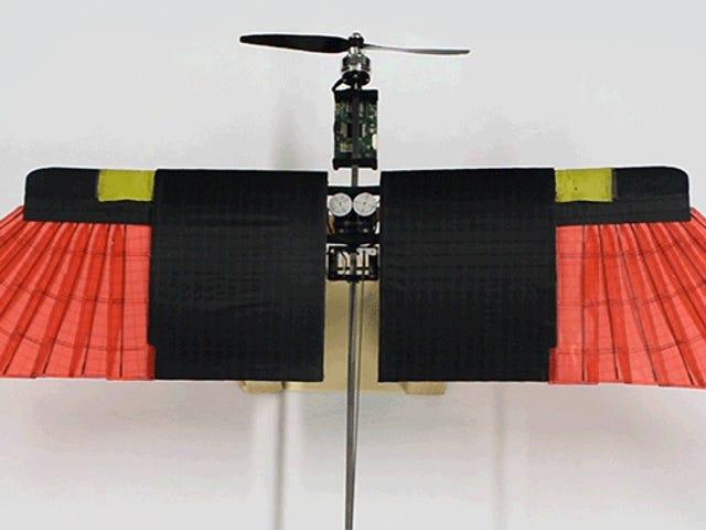Forscher machen eine offensichtliche Entdeckung für die Verbesserung der Drohnen