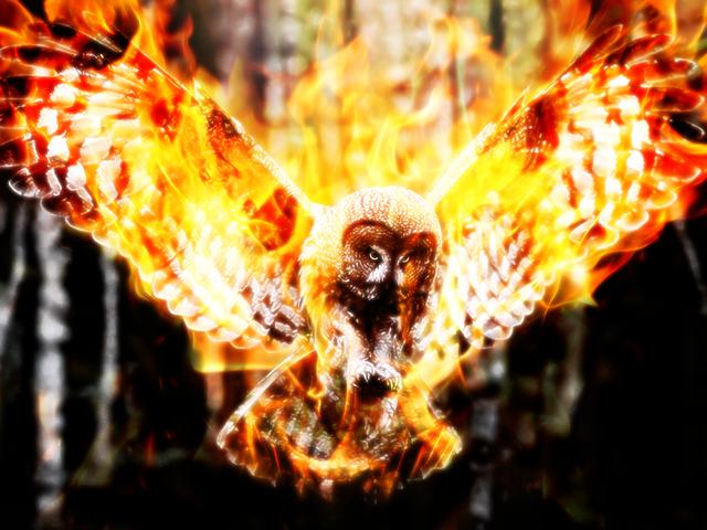 Burning owls