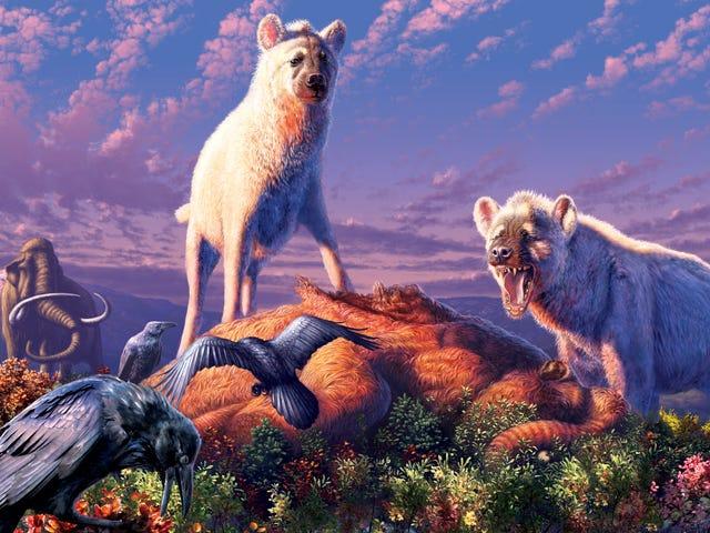 Во время ледникового периода длинноногие гиены бродили по Арктике