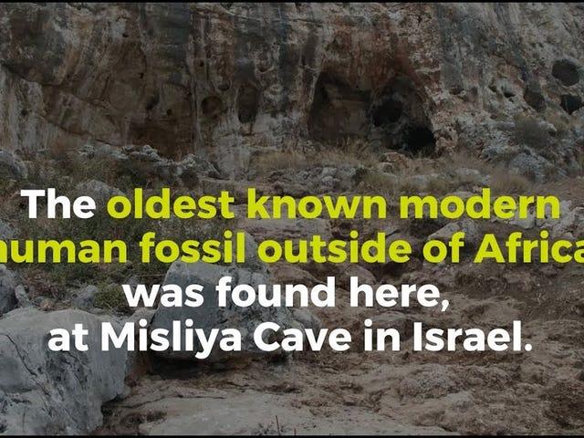The Misliya Cave hominin