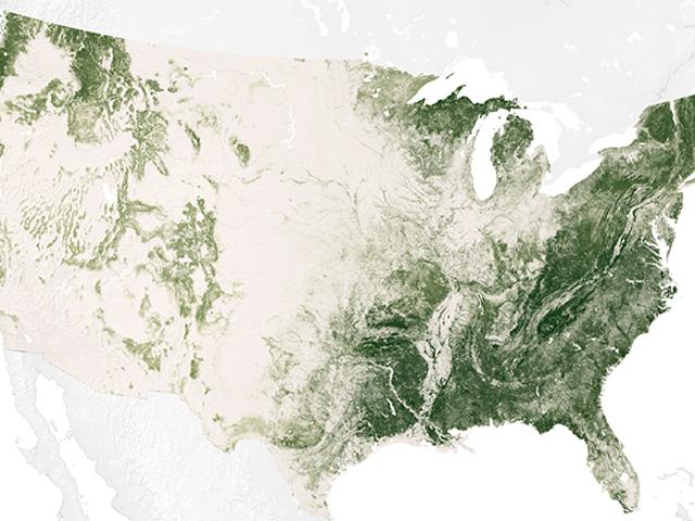 Här är de träd som kommer att försvinna på grund av klimatförändringen