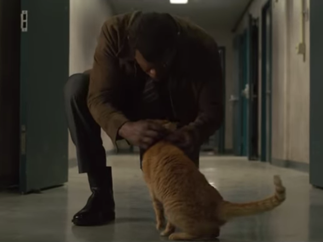Sure, Captain Marvel is great, but we're here for the cat, wrong name and all