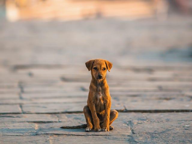 How a stray dog named Subway Sally became a TikTok star