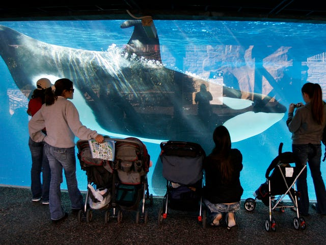 SeaWorld San Diego Is Putting On Its Last Killer Whale Show