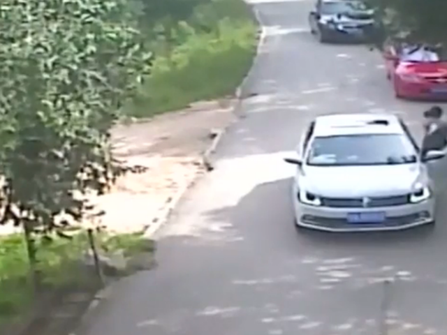 Video Shows Woman in China Being Dragged in Tiger Attack, Another Killed