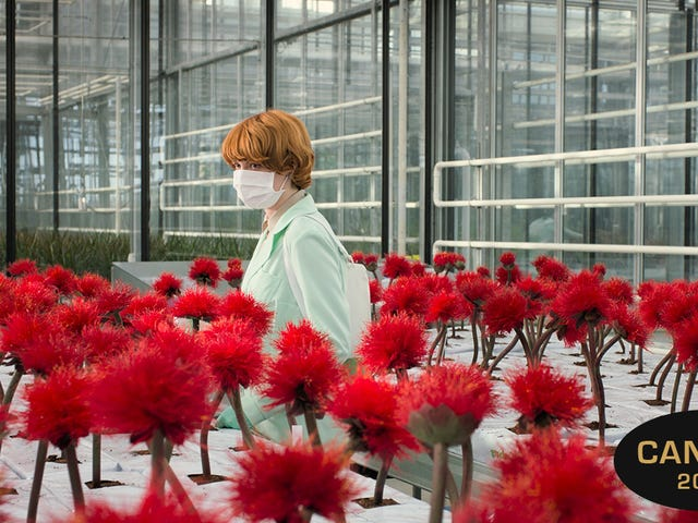 Postwar drama and an unnerving spin on a sci-fi classic are the highlights of Cannes so far