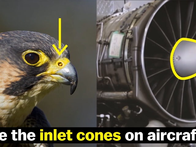 This Crazy-Ass Bird Can Dive As Fast As A Dang Bugatti