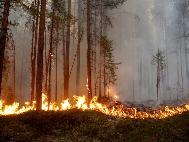 Scandinavia Is on Fire