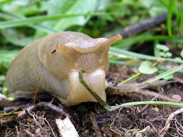 ฆ่า Garden Slugs ด้วย Bath Beer