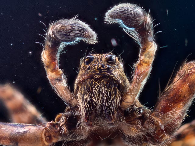 Man Attempts to Kill Spider With Fire; Spider Sets Apartment on Fire