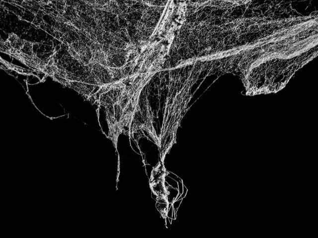 El biologogo que tróó de revelar los secretos de la esquizofrenia drogando arañas con LSD