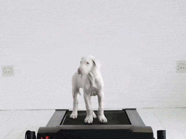 かわいいビデオは子犬が時間の経過とともに大きな犬に成長することを示しています