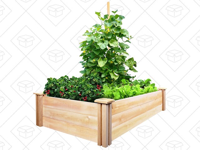 Grow Your Own Herbs and Vegetables In This $27 Garden Bed