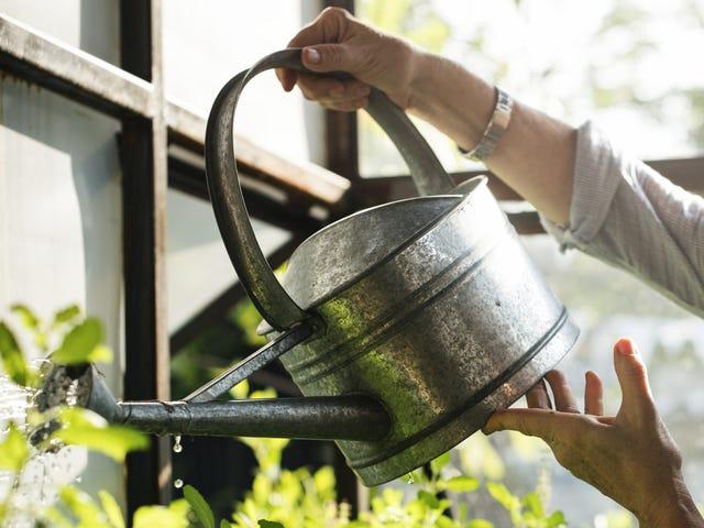 Riega tus plantas por la mañana