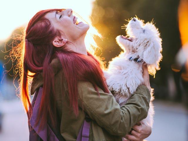 Hvor Mad skal jeg være, når hvide mennesker hilser og snakker med min hund, når jeg går ham i stedet for mig?