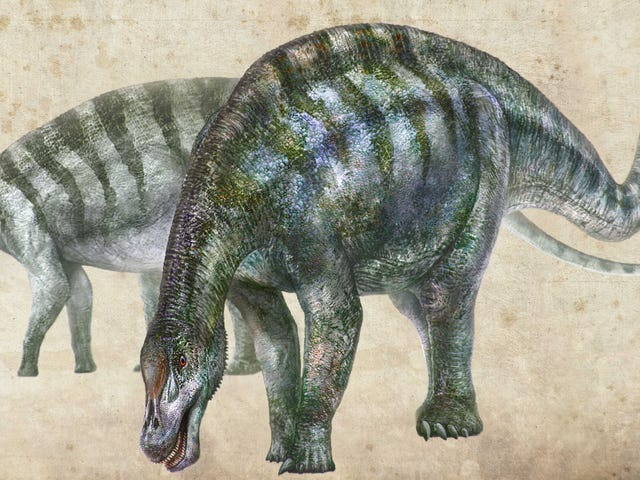 New 'Amazing Dragon' Dinosaur Species Discovered in China