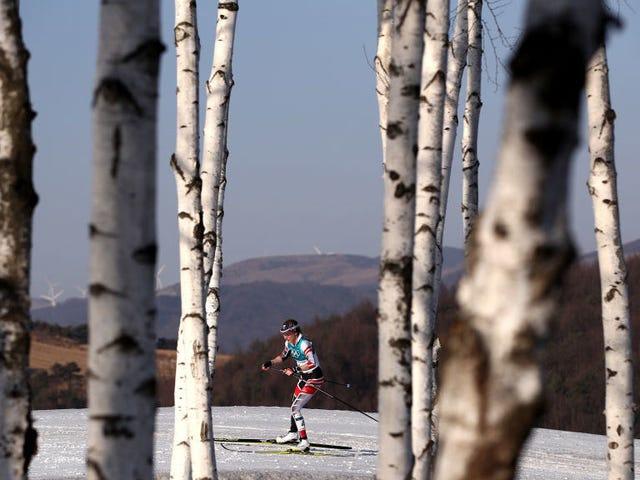 Austriacki Cross-County Skier Running Second Makes Wrong Turn, kończy dziewiąty