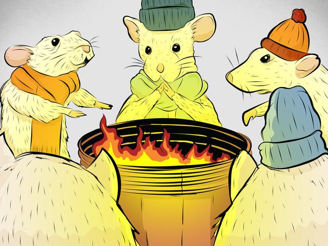 Τα εργαστηριακά ποντίκια παγώνουν τις γάζες τους - και αυτό βυθίζει την επιστήμη