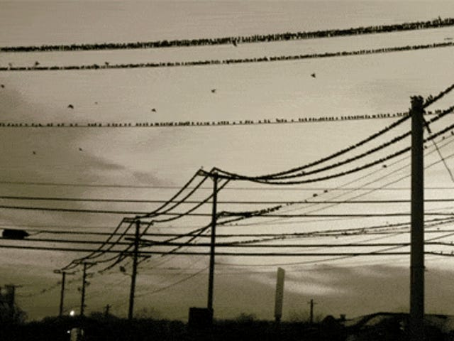 Spectacular video shows birds suddenly flying away from a power line