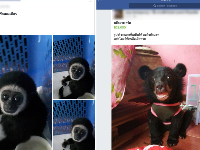 Watchdog Busts Facebook Groups Selling More Than 100 Protected Animal Species in Thailand