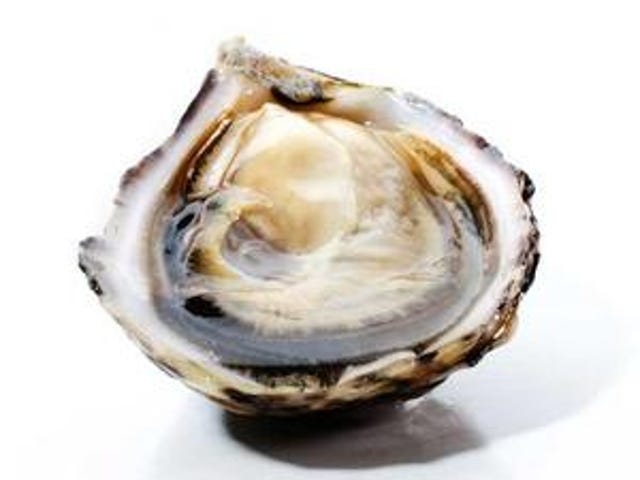 Happy Oyster!
