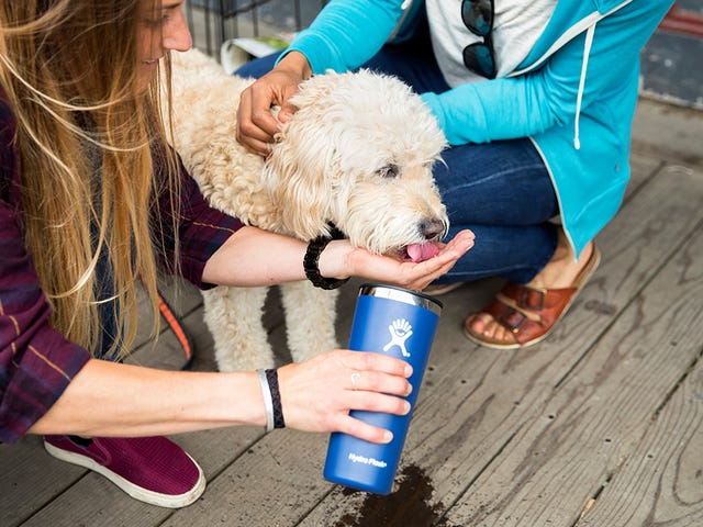 Sip on Some Savings With 50% Off Hydro Flask Tumblers in Retired Colors