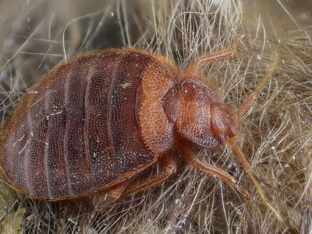 There&#39;s Now Science-Backed Advice on How to Avoid Bringing Home Bed Bugs<em></em>