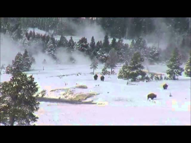 Snowy Yellowstone Footage Shows Geyser, Buffalo, And Bigfoot?