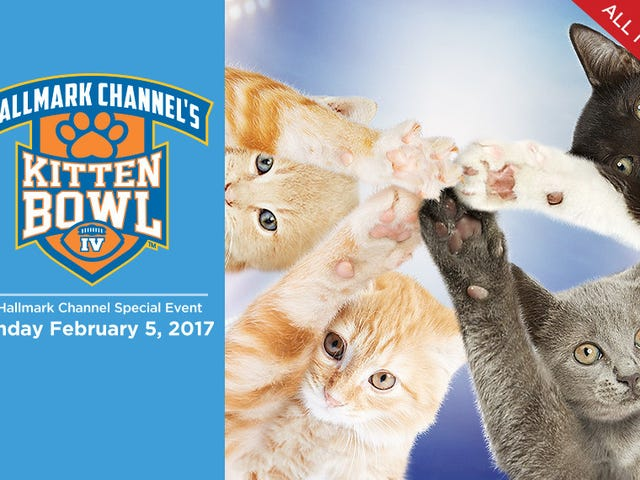 Kitten Bowl 2017!