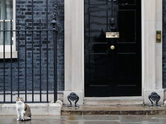 Theresa May didn't want her resignation upstaged by the real star of British politics, Larry The Cat