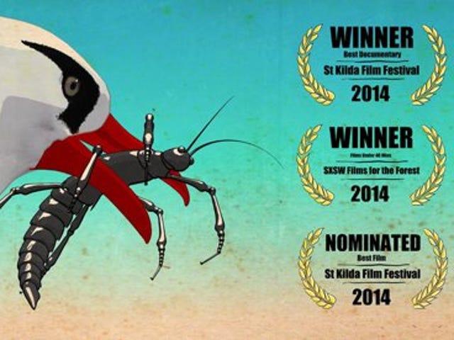 Документальний фільм про переслідування зниклого комаха
