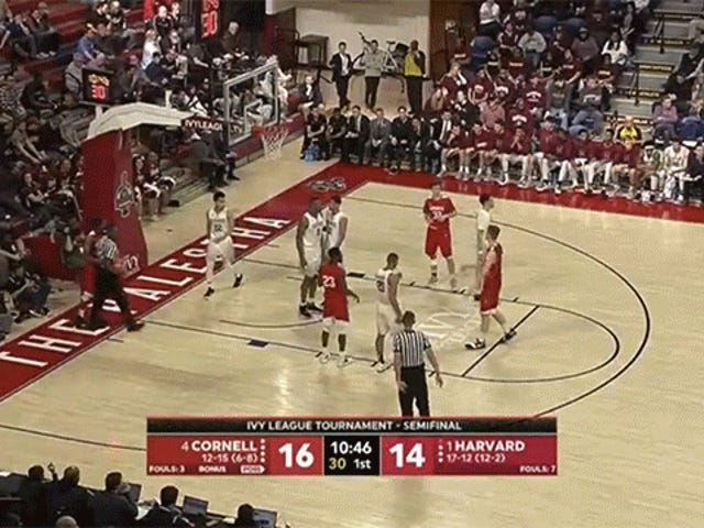 Cornell Player Kills Bee During Ivy League Basketball Tournament Game