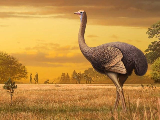 Burung Kuno Beratnya Hampir 1.000 Pound tetapi Masih Bisa Mengangkut Keledai Seperti Burung Unta