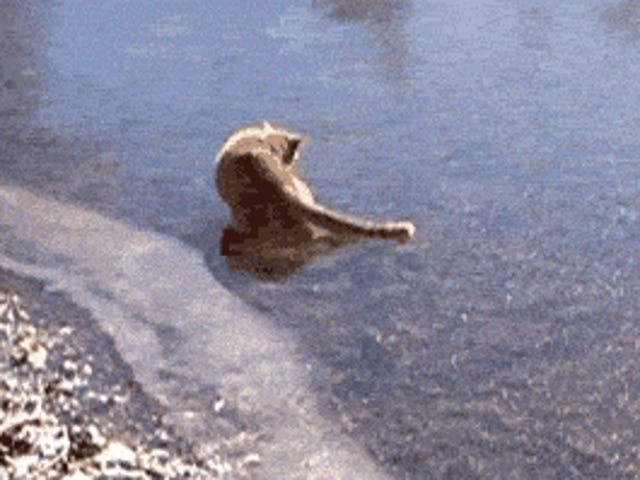 Saturday GIF Party - According to yesterday's rodent, it's still Winter Edition.