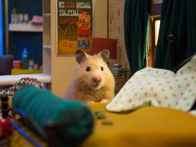 El plató más complejo que verás hoy es una ciudad en miniatura cursa para una serie protagonizada hamsters