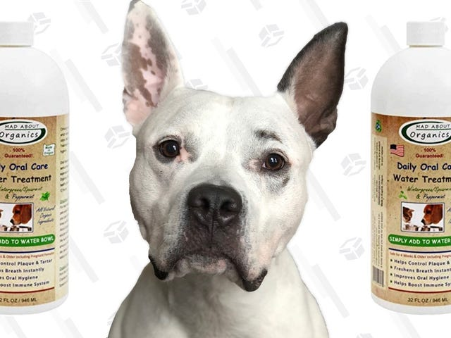Breathe Easy, Mad About Organics Water TreatmentWill Neutralize Your Good Boy's Bad Breath