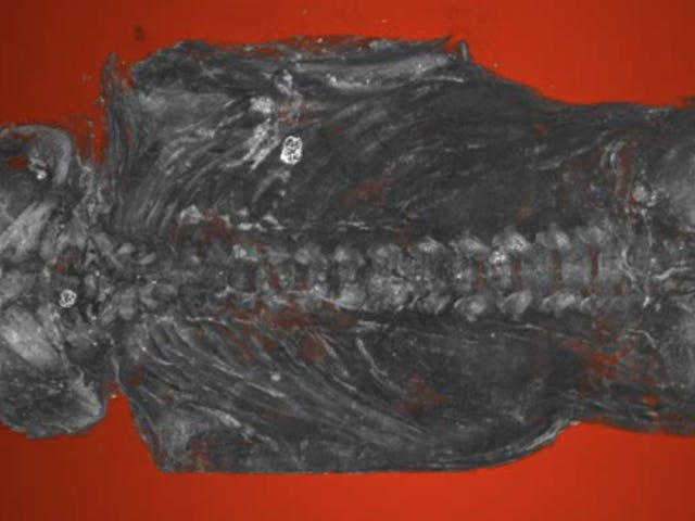 Ancient Egyptian Mummified 'Hawk' Is Actually a Stillborn Human Baby