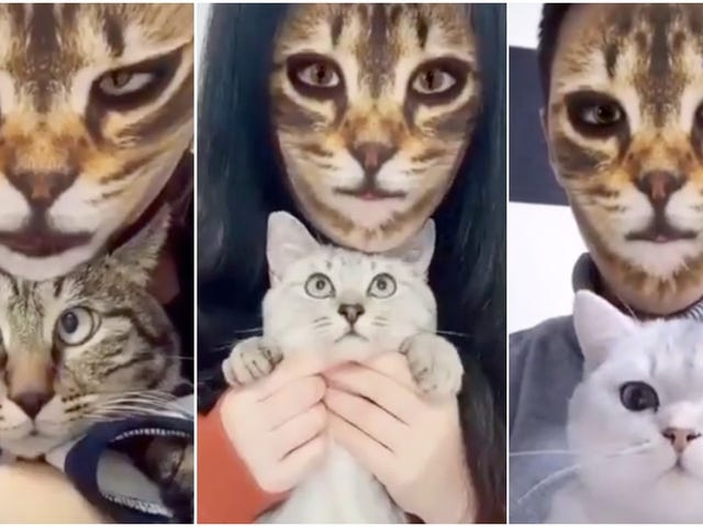 People Keep Freaking Out Their Cats With Cat Face Filters
