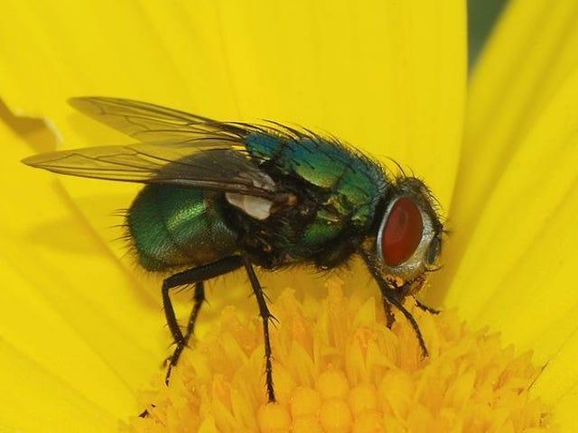 Deze video's laten je een deel van de vliegen zien die je waarschijnlijk nog nooit eerder hebt opgemerkt