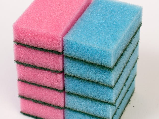 Sponges Are Surprisingly Good At Soaking Up Problem Chemical BPA