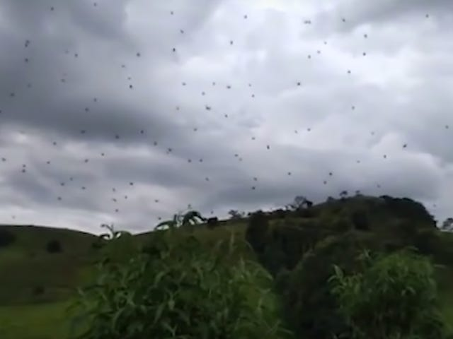 Imagine Walking Into This Wall of Spiders and Never Sleep Again