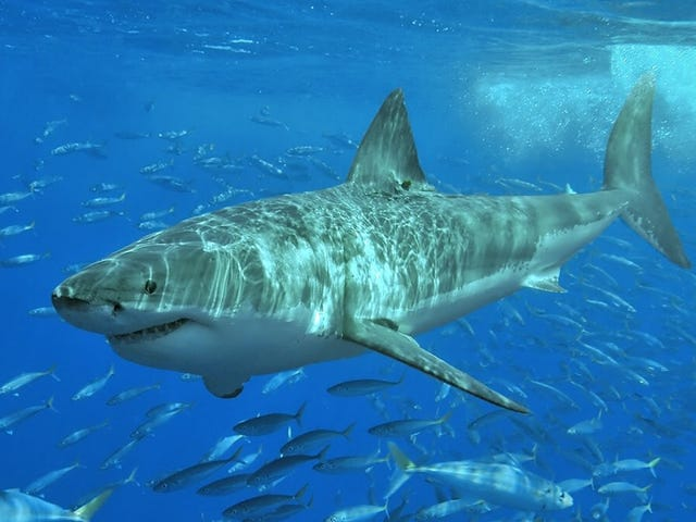 What to Do If You're Attacked By a Shark, According to a Navy SEAL
