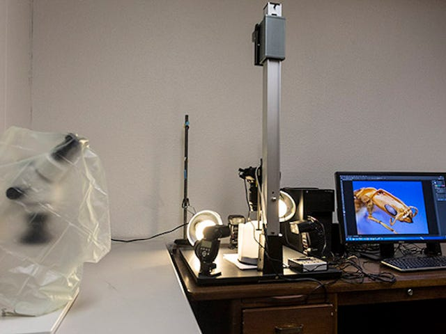 How To: Build A World-Class Insect-Photography Rig For Under $6,000