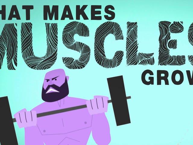 Apa yang Membuat Otot Anda Tumbuh, dan Bagaimana Otak Mereka Tumbuh Lebih Kuat