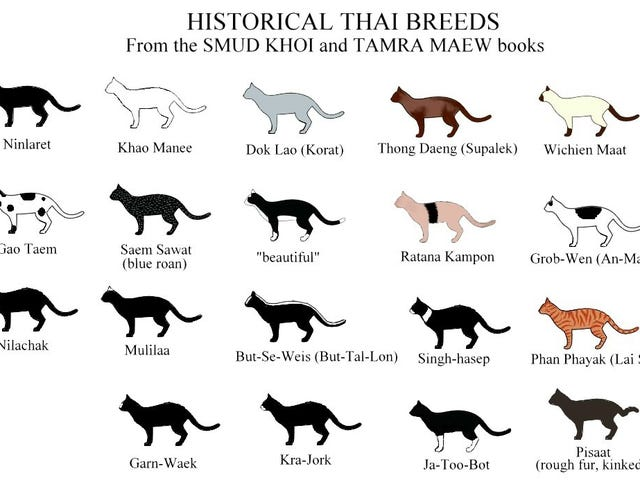 Seventeen lucky cat breeds of Thailand (and the six unlucky ones)