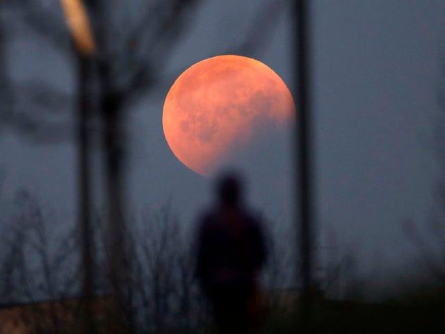 Las mejores fotos del eclipse lunar total y la superluna de ayer