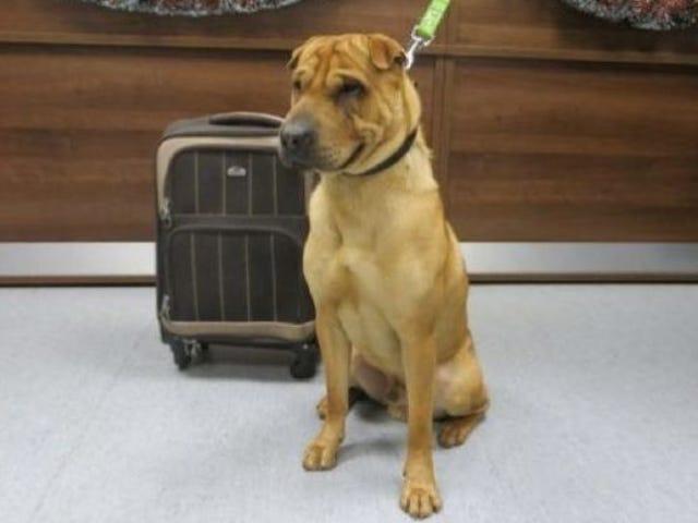 この犬がおもちゃのスーツケースで放棄された理由の本当の話