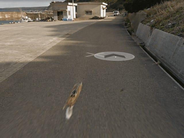 Оригінал або підробка - головна сторінка Google Street View