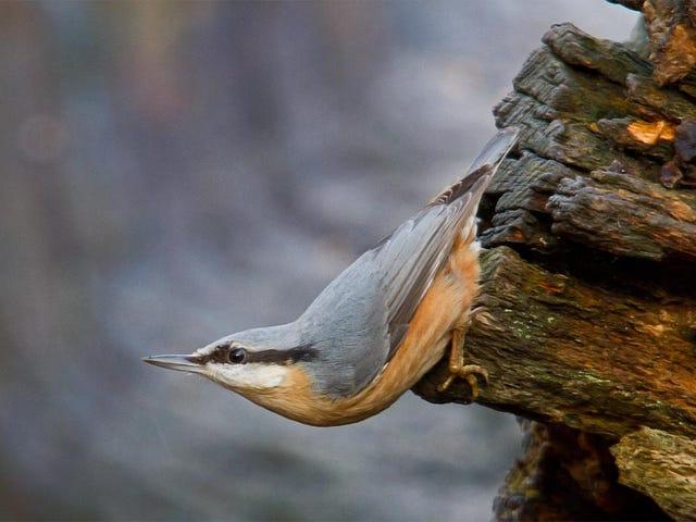 A madáretetőről